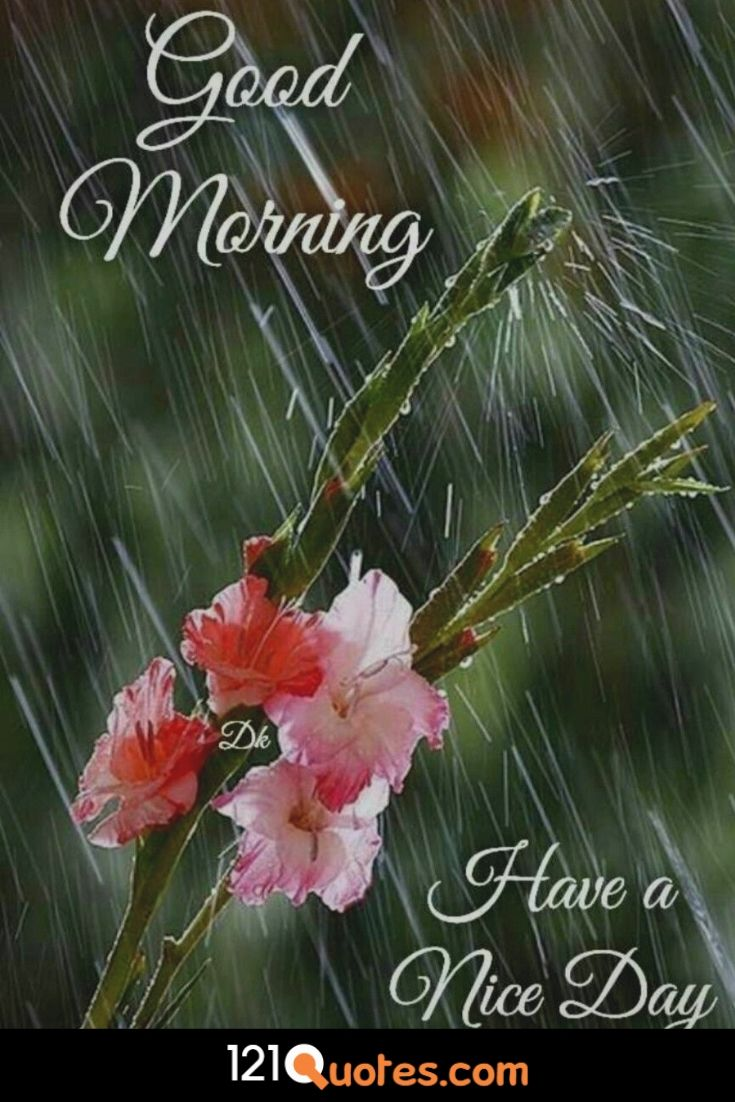 Good Morning Have a nice day image with red rose and rain