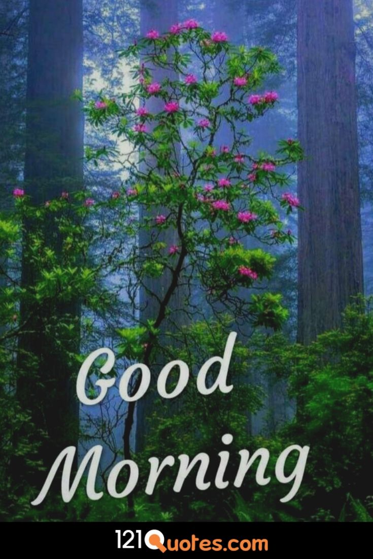 Good Morning Images Photo Picture Wallpaper Pics Download for Whatsapp & Facebook