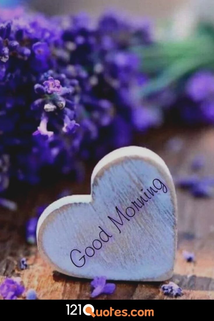 Good Morning Images Wallpaper Photo Pics Download With Flower In HD for Whatsapp & Facebook