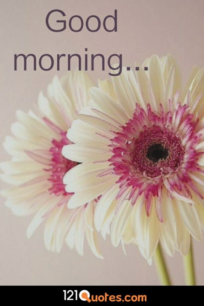 Good Morning Pic With White Sun Flower