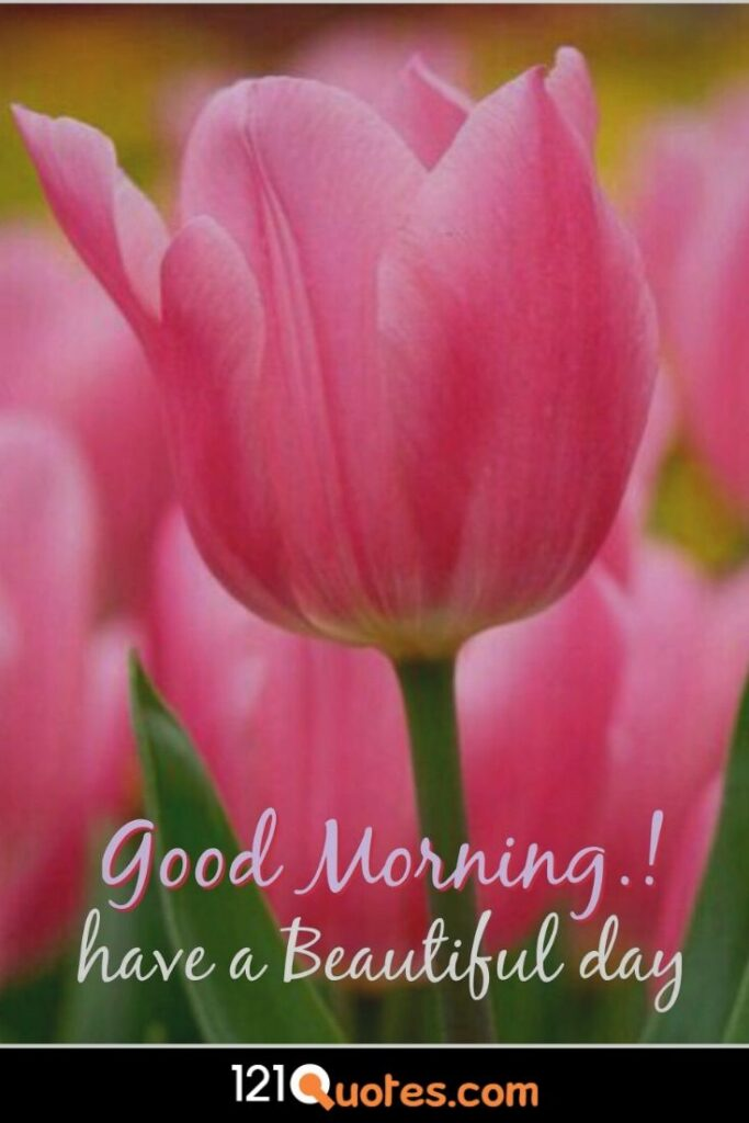 Good Morning have a beautiful day image with Pink Flower in HD for Free Download