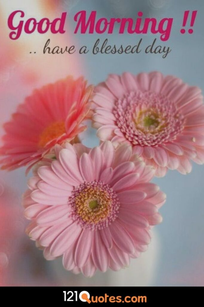 Good Morning have a blessed day image with pink flower in HD for Free Download