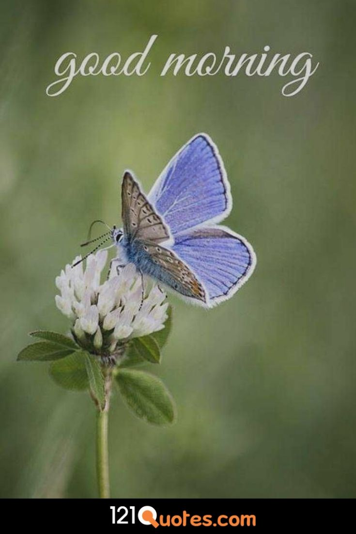 Good Morning images with blue buterfly and white flower in HD for Free Download in HD