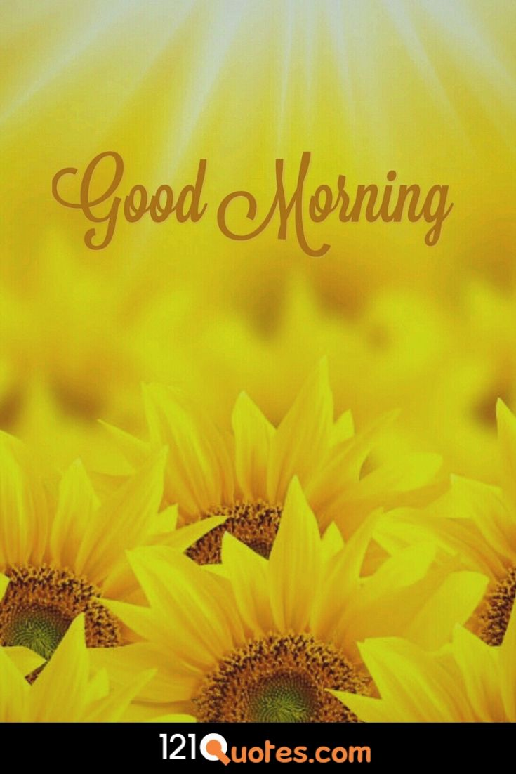 Good Morning wallpaper with sun flower for free download in hd