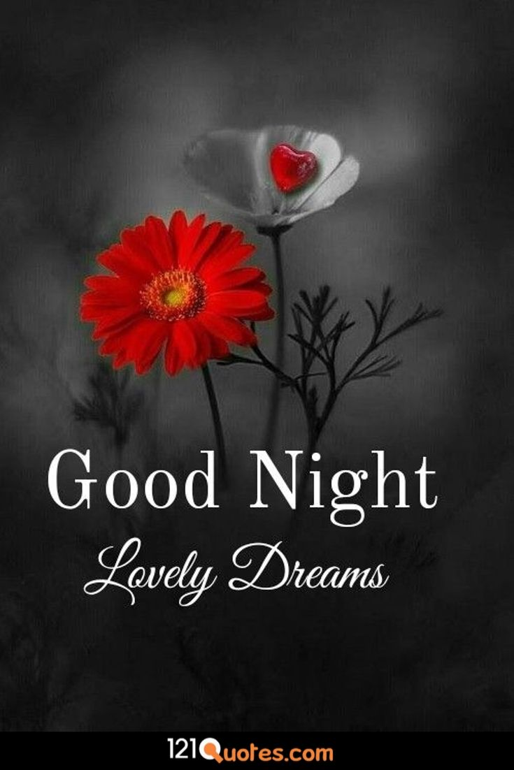 500 Beautiful Good Night Images Best Collection