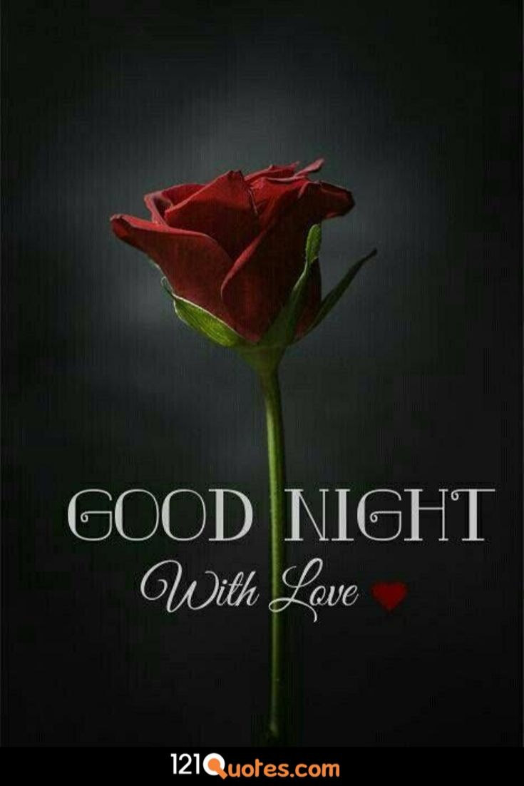 good night hd image with red rose