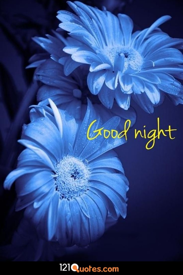 good night pic new