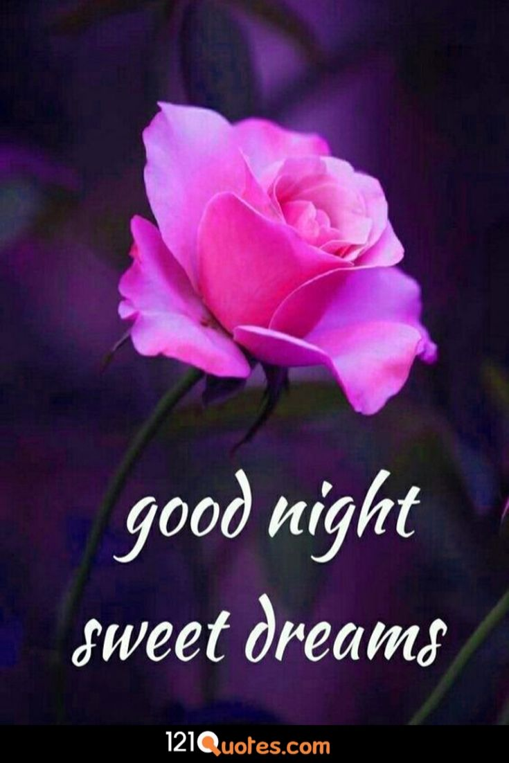 good night sweet dreams image with pink rose
