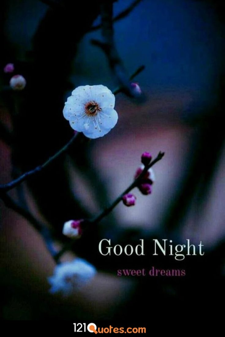 good night wallpaper free download for mobile hd