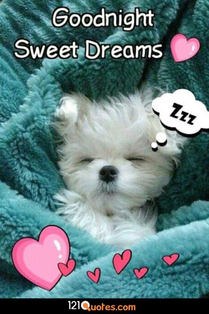good night wallpaper teddy