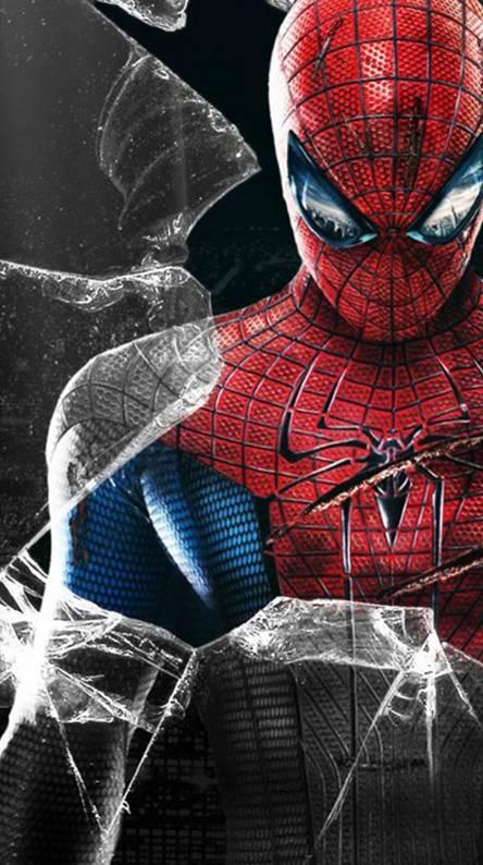 hd spider wallpaper