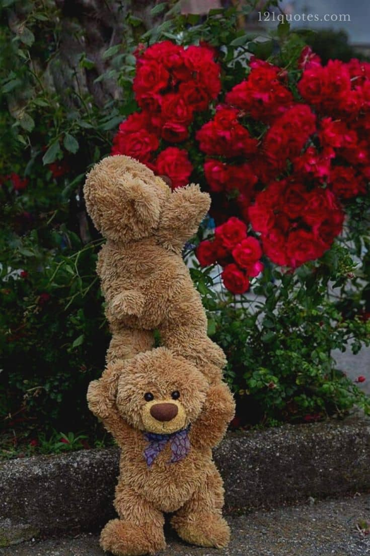 teddy bear images for whatsapp dp