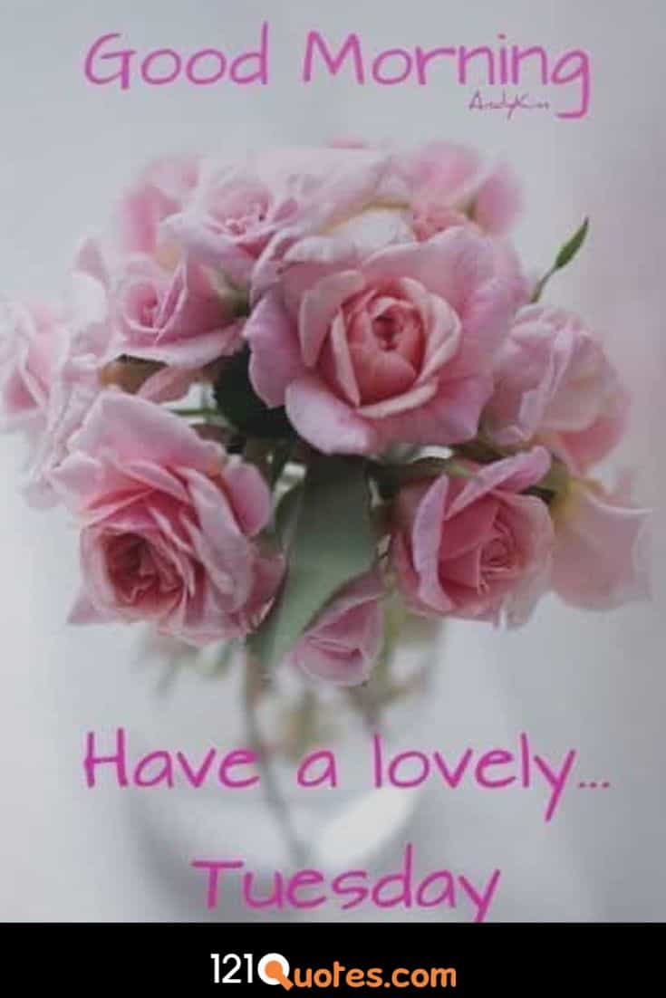 Good Morning Have a Lovely Tuesday Wallpaper with Pink Roses