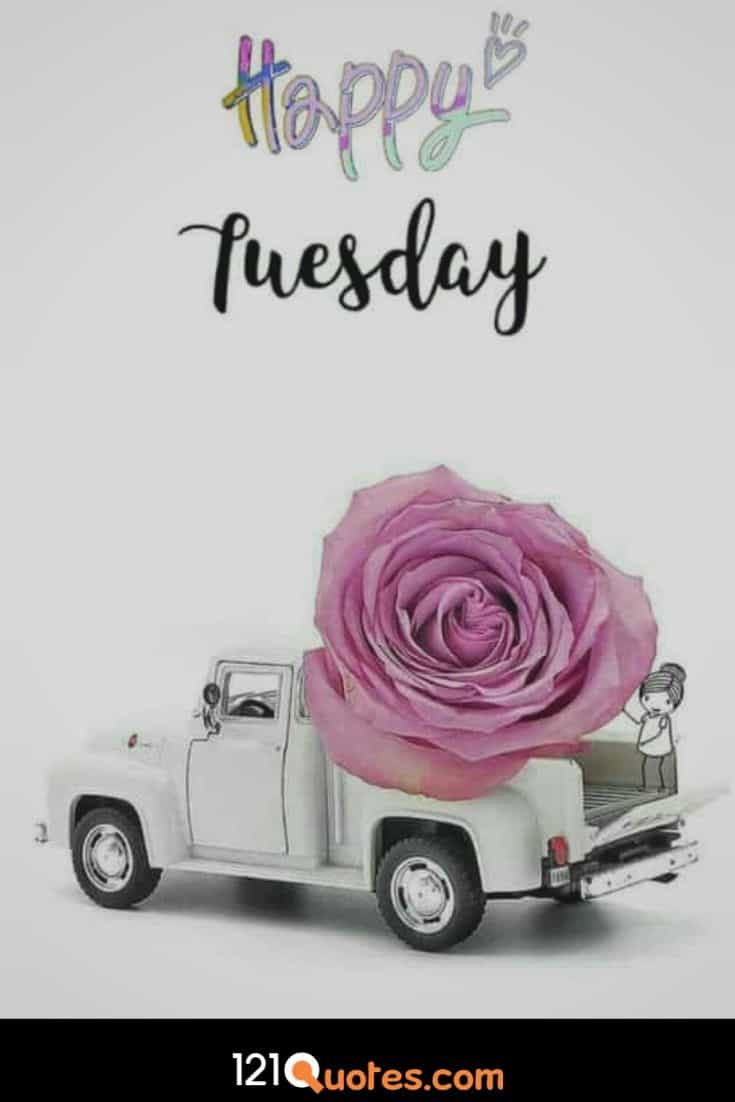 Happy Tuesday Images for Whatsaap Story