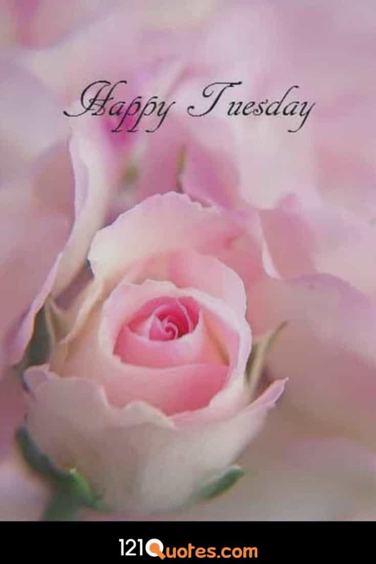 Happy Tuesday Wallpaper with Pink Rose