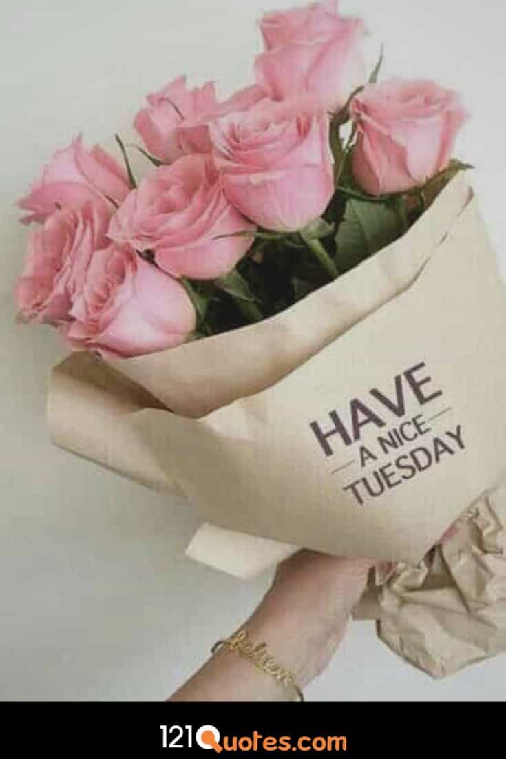Have a Nice Tuesday Pic with Pink Roses