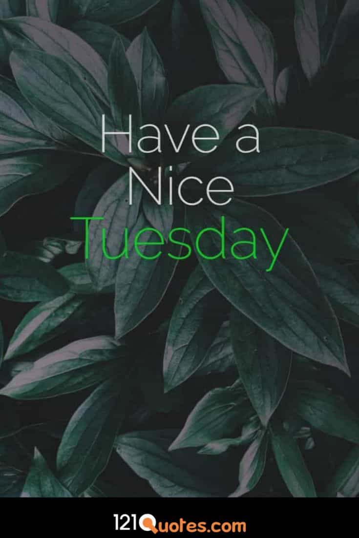 Have a nice Tuesday images for whatsapp and facebook profile pictures