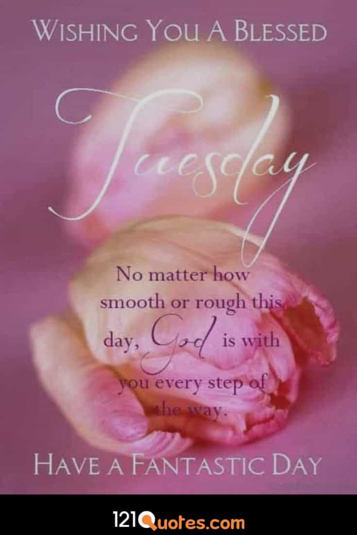Wishing you a blessed Tuesday Wallpaper with Pink Rose