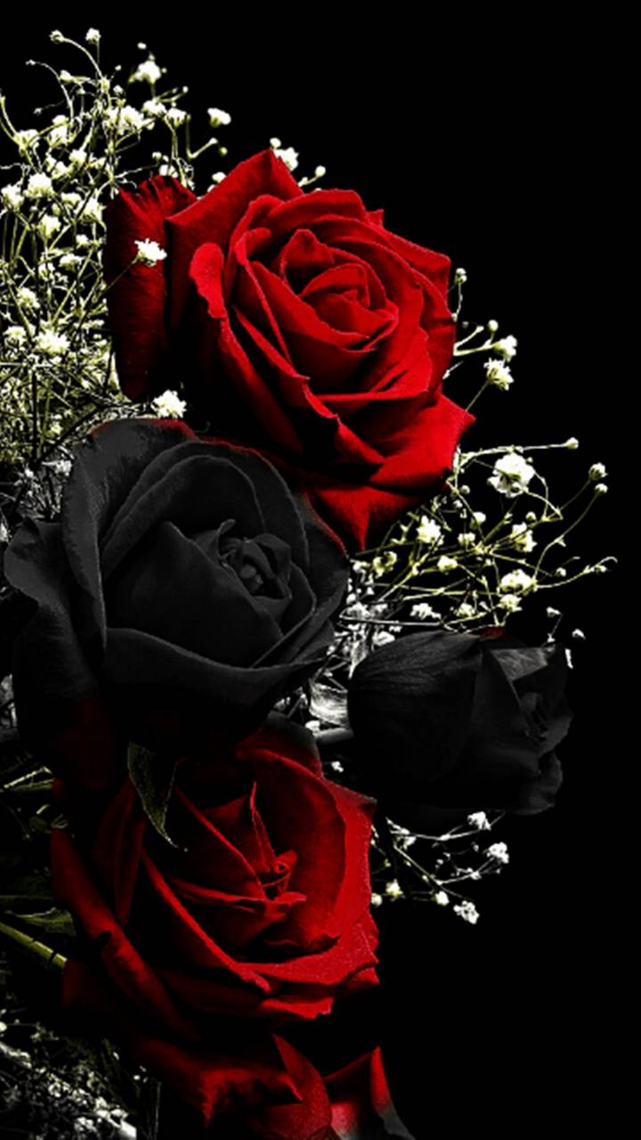 100 Hq Red Rose Wallpaper Images Best Collection 121 Quotes