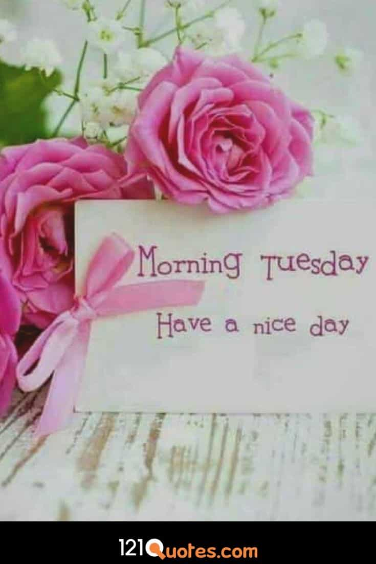good morning images of tuesday with good rose flowers and buckets