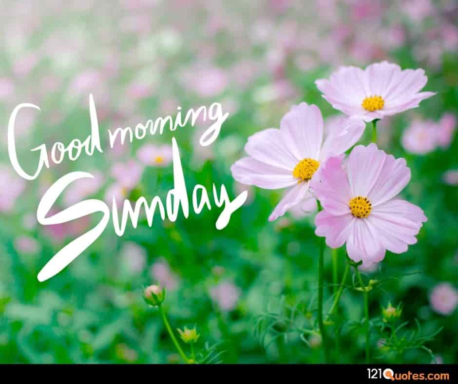 good morning sunday images download hd