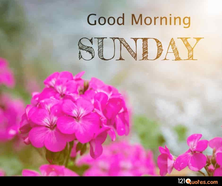good morning sunday images with pink flowers wallpaper