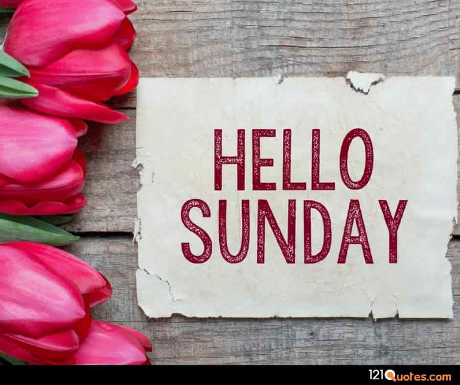 hello sunday images with pink rose for facebook and whatsapp