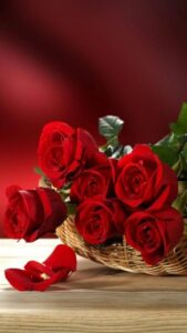 red rose image gallery