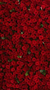 red rose wallpaper for love