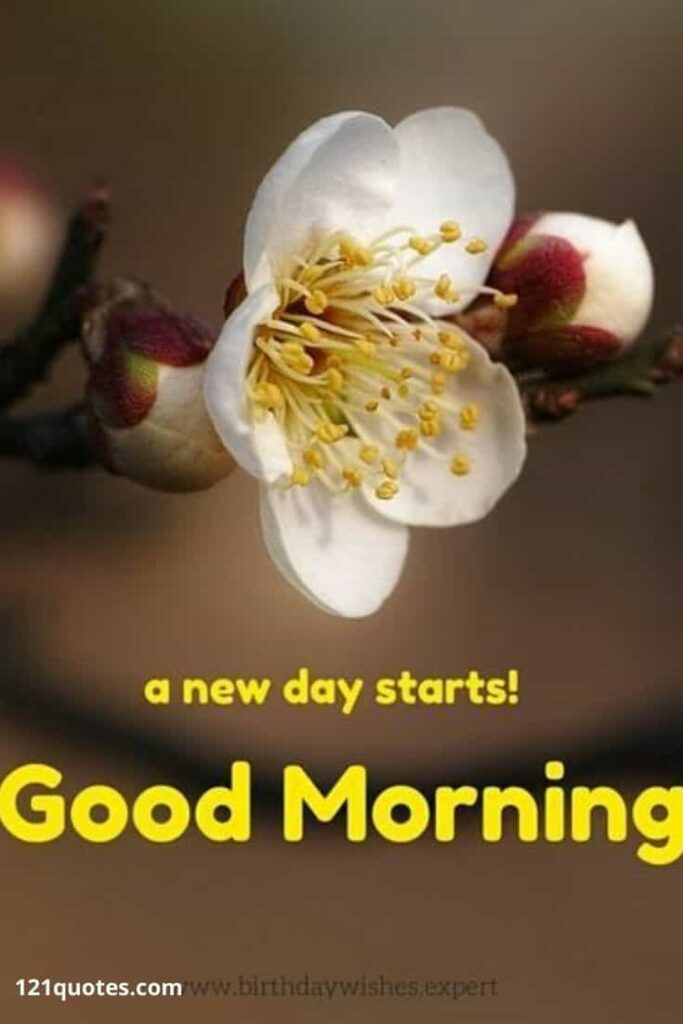 A new day starts Good Morning