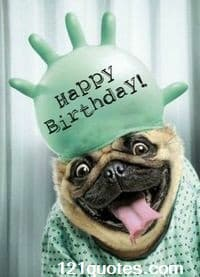 Funny Birthday memes for him with dog images