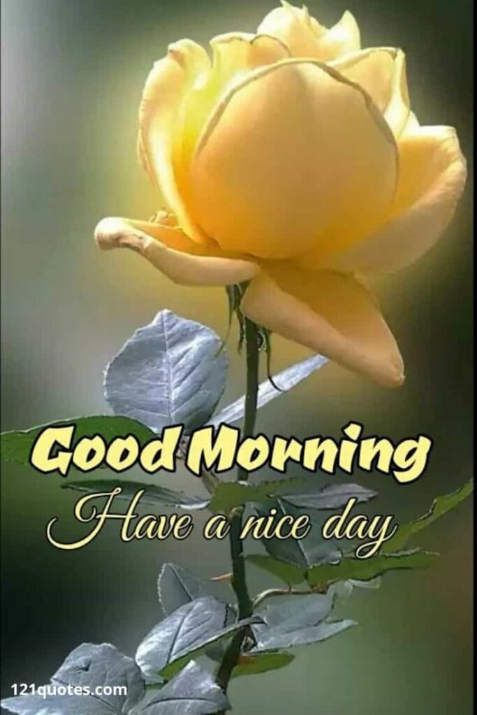 Good Morning Have a Nice Day with Yellow Rose