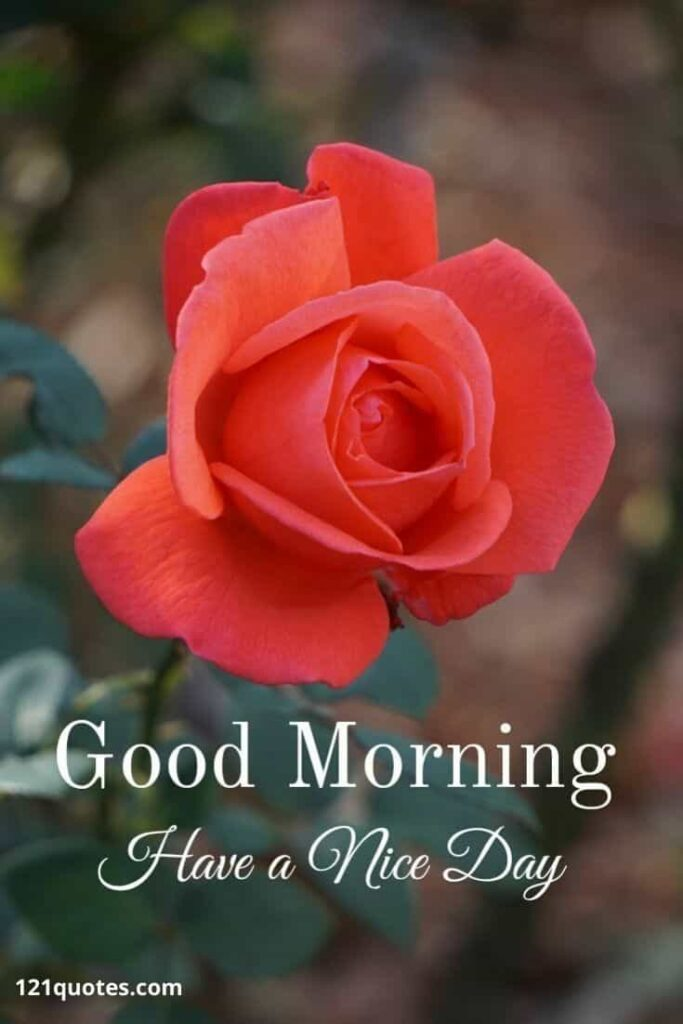 Good Morning Have a Nice day with Red Rose Image