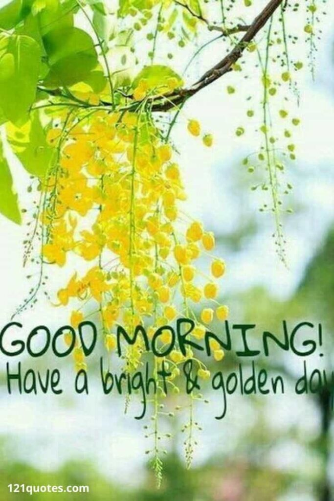 Good Morning Have a bright and golden day