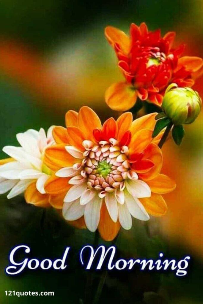 good morning flower images hd