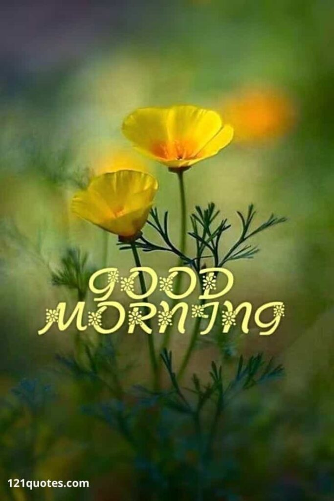 good morning flowers hd images