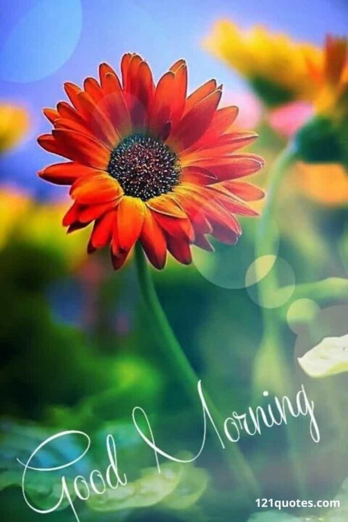 good morning flowers images for friends