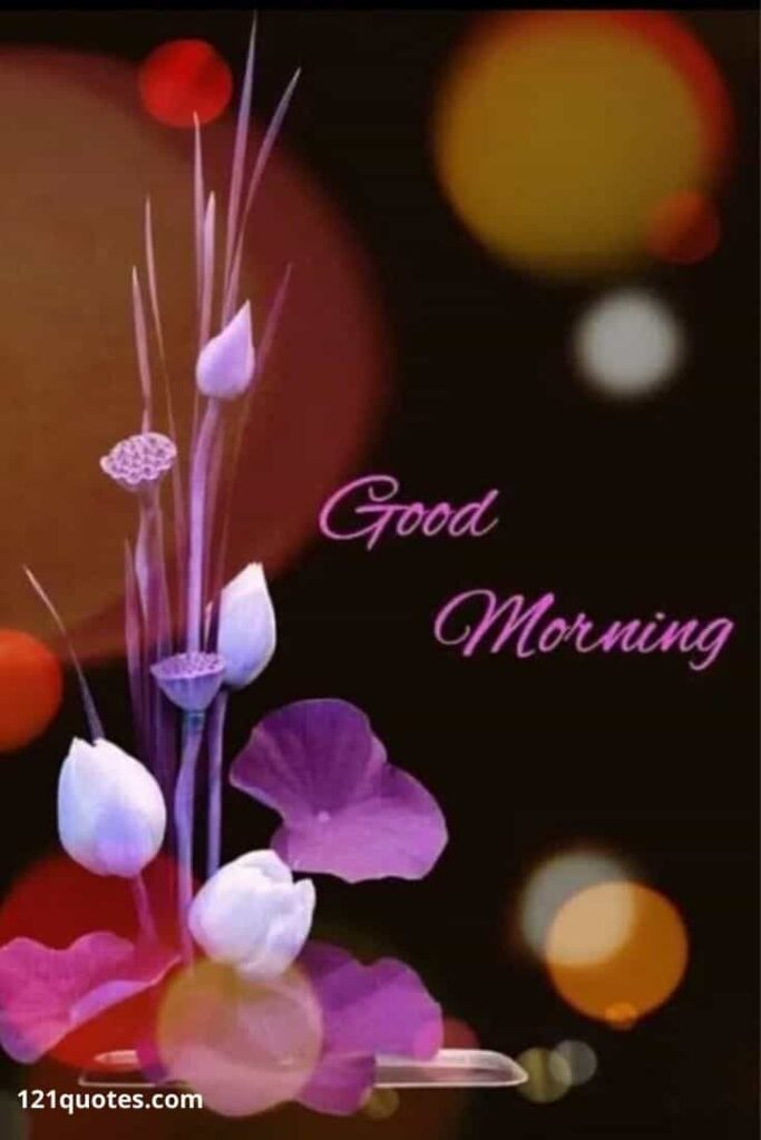 good morning flowers images for whatsapp free download