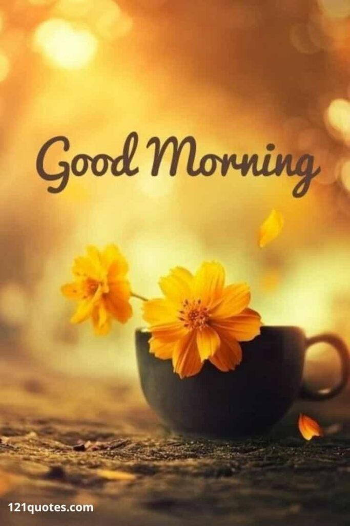 good morning flowers images for wife