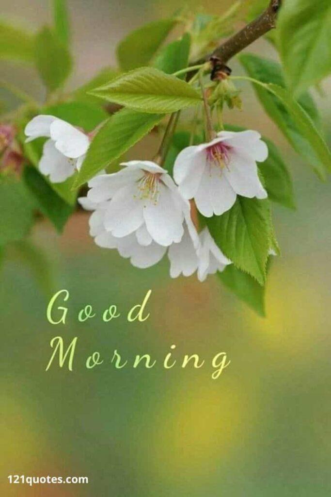 good morning image with flower - status image