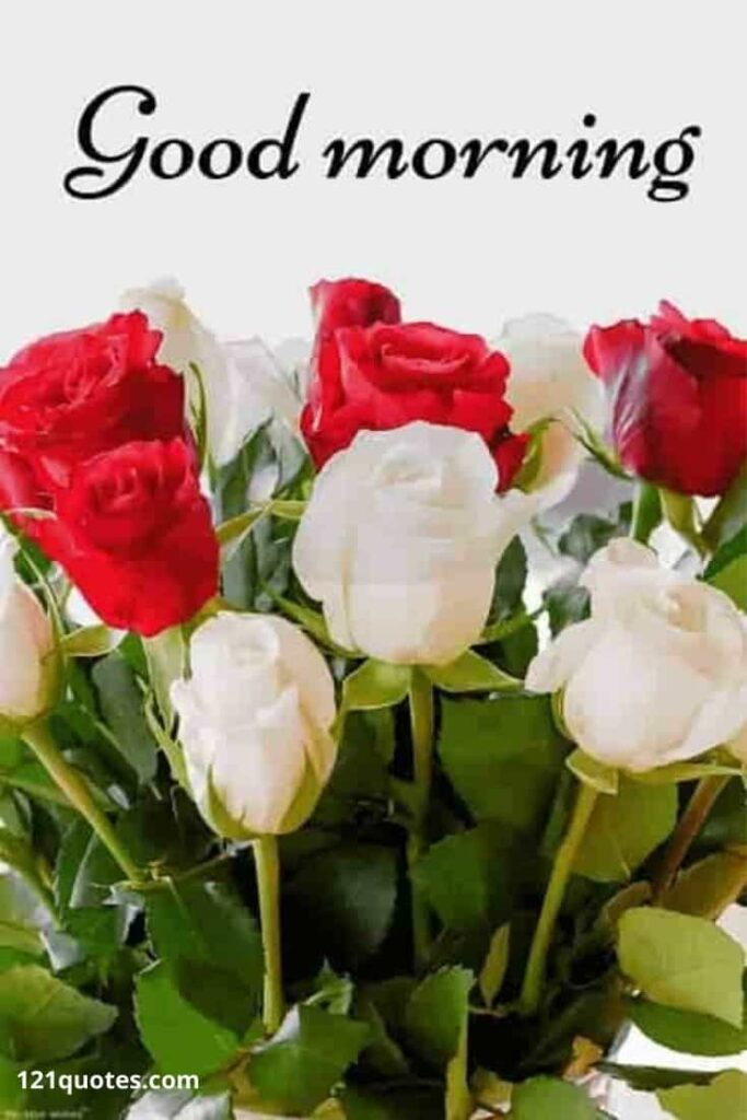 good morning images with beautiful roses