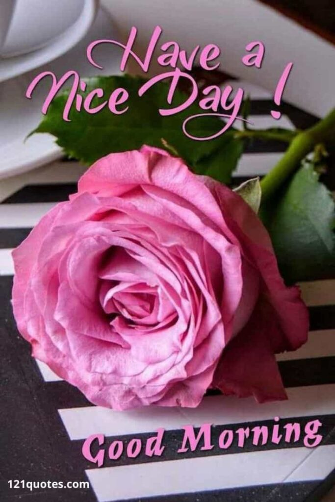 have a nice day images with pink rose
