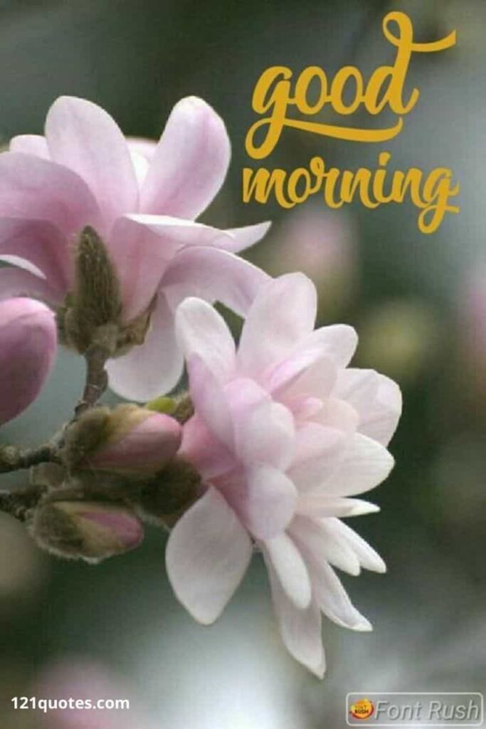 new good morning flowers images