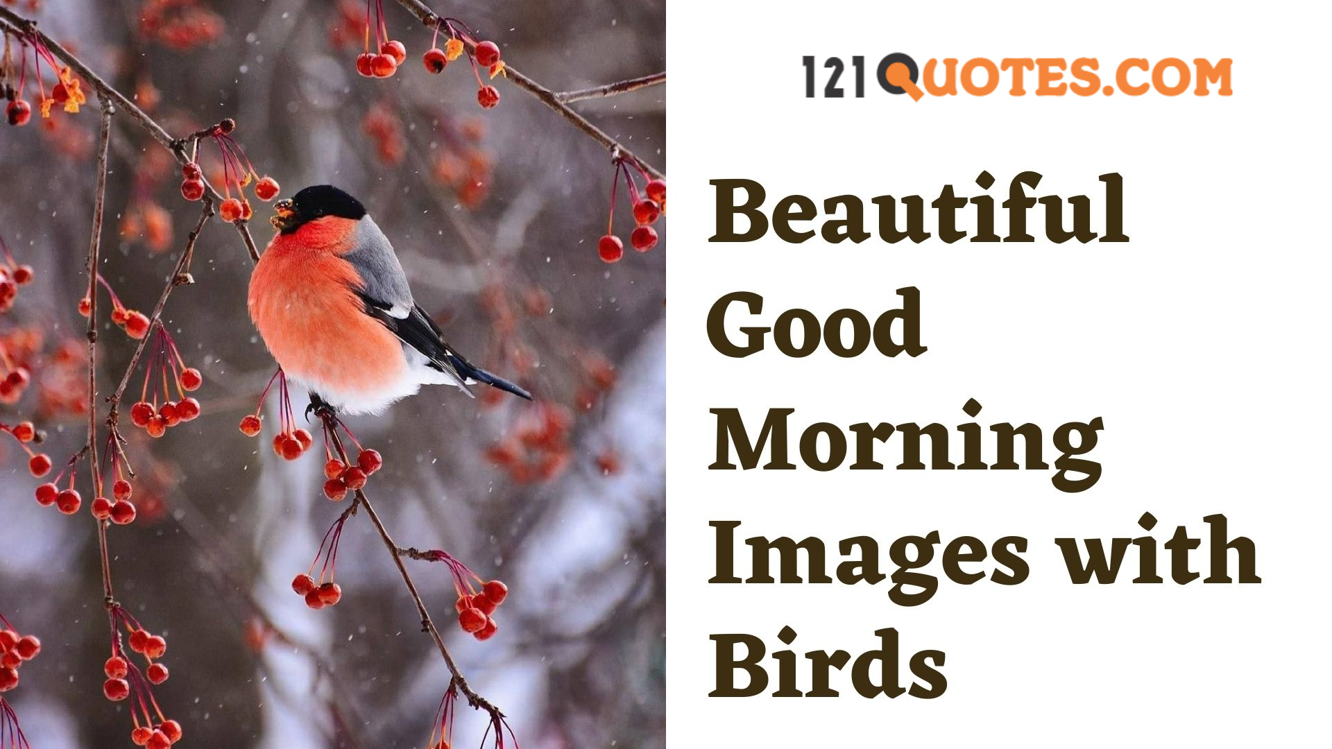 Beautiful Good Morning Images with Birds