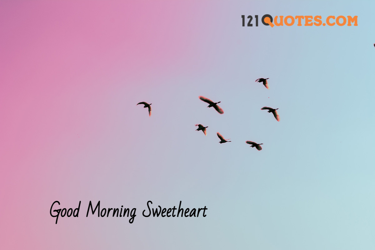 beautiful good morning pic with birds